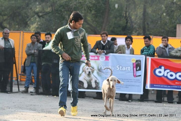 all breed championship,other,, Day 2 IKL Show IIPTF, DogSpot.in