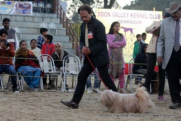ex-47,lhasa apso,sw-73,, DHOOMI, Lhasa Apso, DogSpot.in