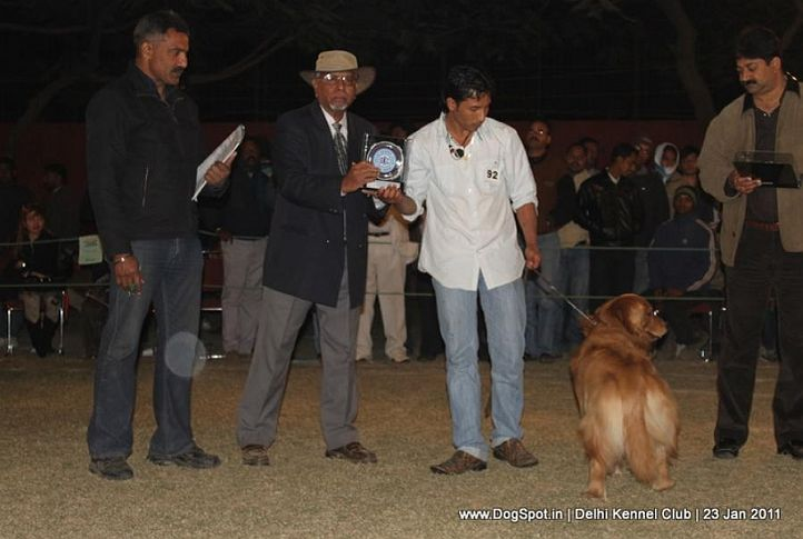 ex-92,golden,lineup,sw-25,, TH. GOLDEN ARMY S HOPE 2 BE WONDERFUL, Golden Retriever, DogSpot.in