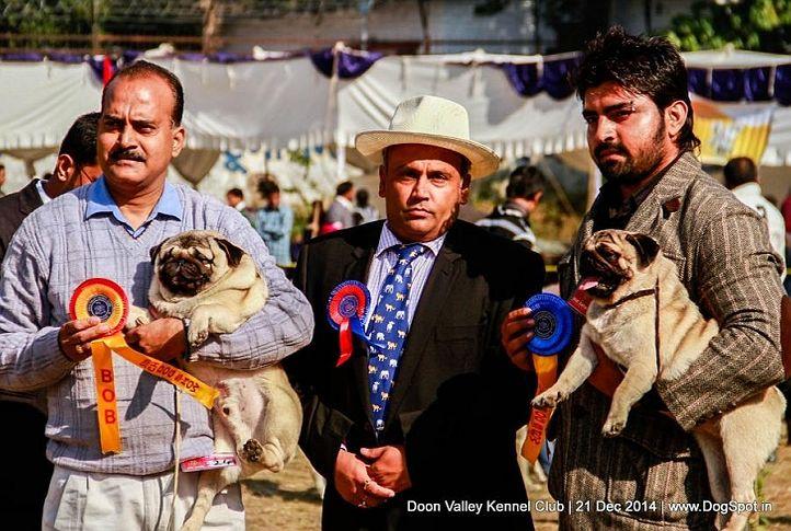 bob,pug,rbob,sw-143,, Doon Valley Kennel Club, DogSpot.in