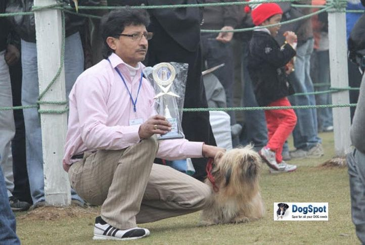 Lahsa Apso,, Ghaziabad Dog Show 2010, DogSpot.in