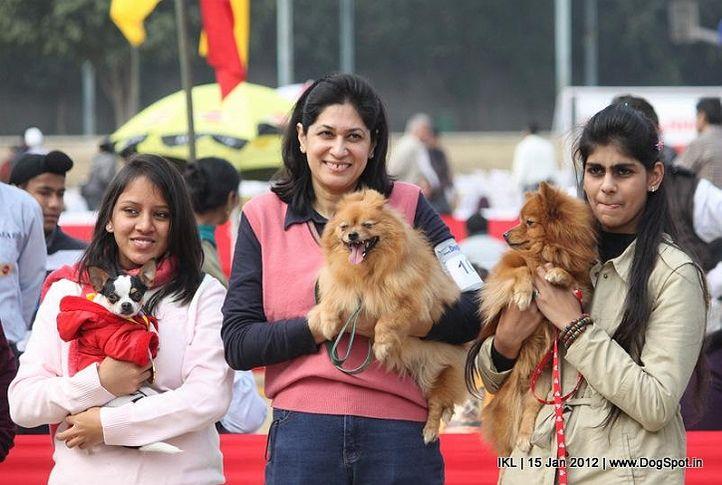 chihuahua,pomeranian,, IKL Delhi 2012, DogSpot.in