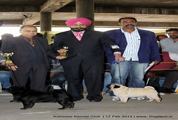 pomeranian,sw-82,, Jalandhar Show 2013, DogSpot.in