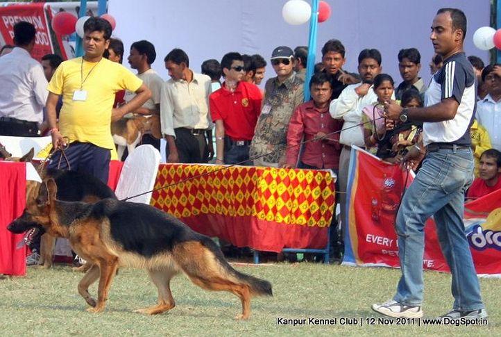 ex-199,gsd,sw-42,, LISA, German Shepherd Dog, DogSpot.in