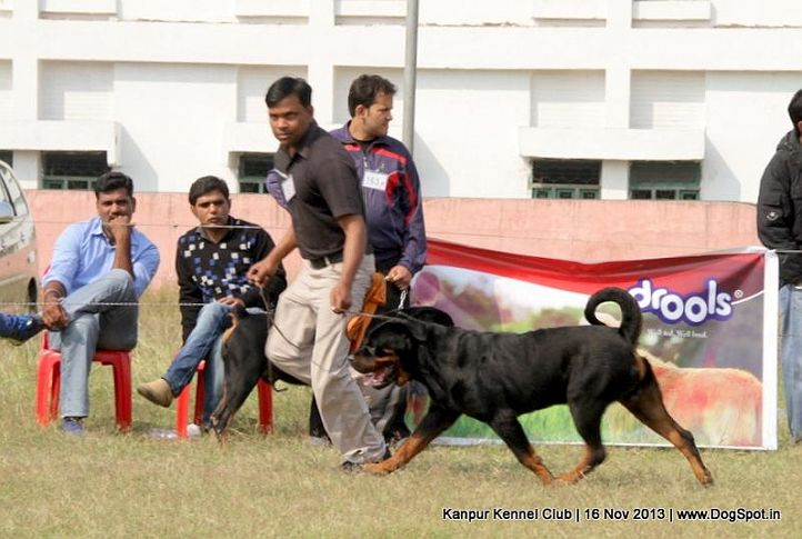 ex-157,rottweiler,sw-97,, Kanpur Dog Show 2013, DogSpot.in