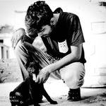 Indian Pariah Dog