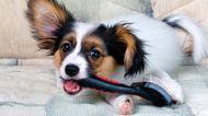 Necessary Dog Grooming Equipment
