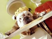 Dog Grooming: Why is it So Important?
