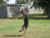 Stop your dog from becoming a jumping jack