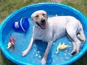 Preparing for Summers - Pet Safety Tips