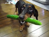BEST FOOD FOR YOUR POOCH