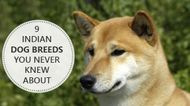 9 Indian Dog Breeds You Never Knew About