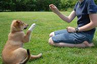 Pet Parents Role During Training