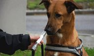 Dogs Can Sniff Out Cancer In Humans
