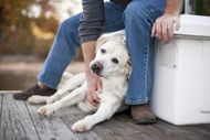 Dog Senses (V) Skin - An insight into a dog's tactile sense!