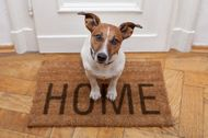 16 life's lessons you can learn from your dogs