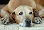 Pneumonia in dogs - Types, symptoms and treatment