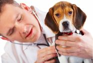 How to care for your pet before and after a surgery?