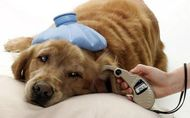 Canine Diabetes - Causes, Symptoms and Treatment