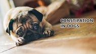 Constipation in dogs - Causes, Symptoms & Treatment