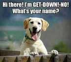 7 funny things that only a pet parent would understand