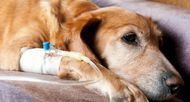 7 Things You Should Do If You Find Out Your Dog Has Cancer