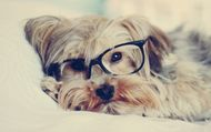 5 Must have accessories for every dog