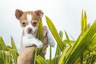 6 Top Aggressive Dog Breeds