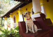 5 Pet-Friendly Hotels In India