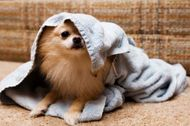 5 effective ways to keep your pet healthy during monsoon