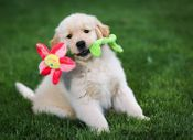 Ten things to prepare your home for a puppy