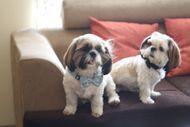 DIY Dog Spa: Natural Way To Give Your Dog an At-Home Spa Day