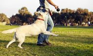 Developing your Dog's Behaviour -  Top 10 Questions on Training your Dog