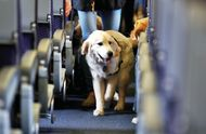 How To Travel With Your Pet In Indian Airlines