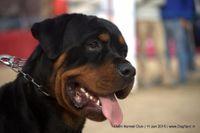 Delhi Kennel Club