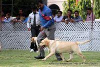 Labrador Specialty Show Jabalpur -2014