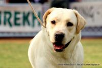 Orissa Kennel Club - 7 Dec 2014