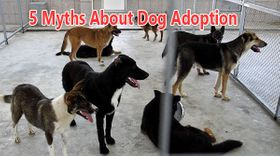 5-myths-about-dog-adoption