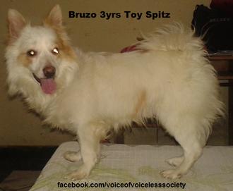 Bruzo - Spitz