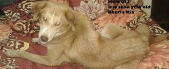 Mowgli - Mixed Breed