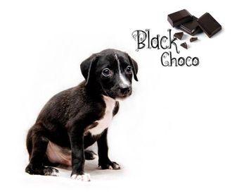 Choco - Mongrel