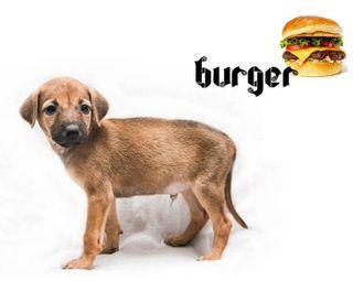 Burger - Mongrel