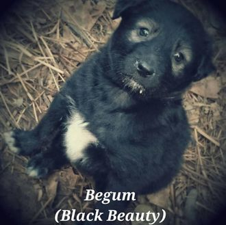 Begum - Mixed Breed