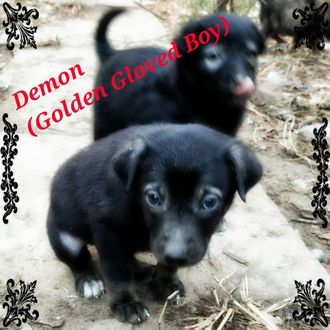 Demon - Mixed Breed