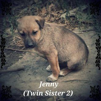 Jenny - Mixed Breed