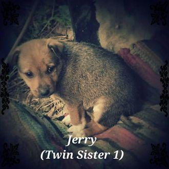 Jerry - Mixed Breed