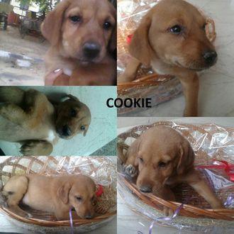 Cookie - Mongrel