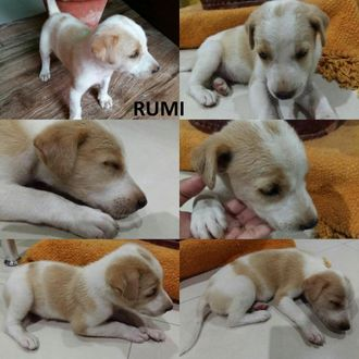 Rumi - Mongrel