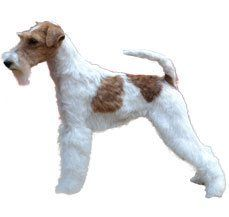 Fox Terrier (Wire)