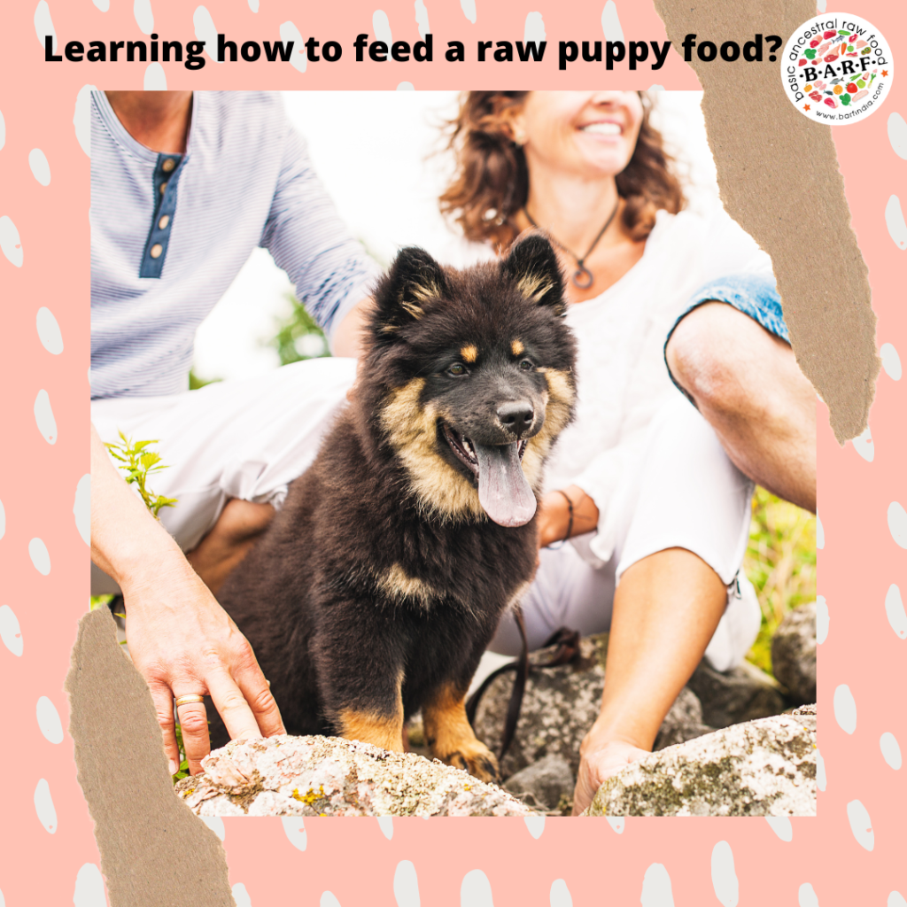 Everything you wanted to know about raw diet for your puppy